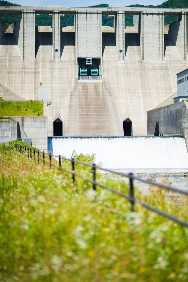 苫田ダム正面と生い茂る草の写真