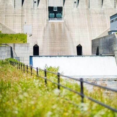 「苫田ダム正面と生い茂る草」の写真素材