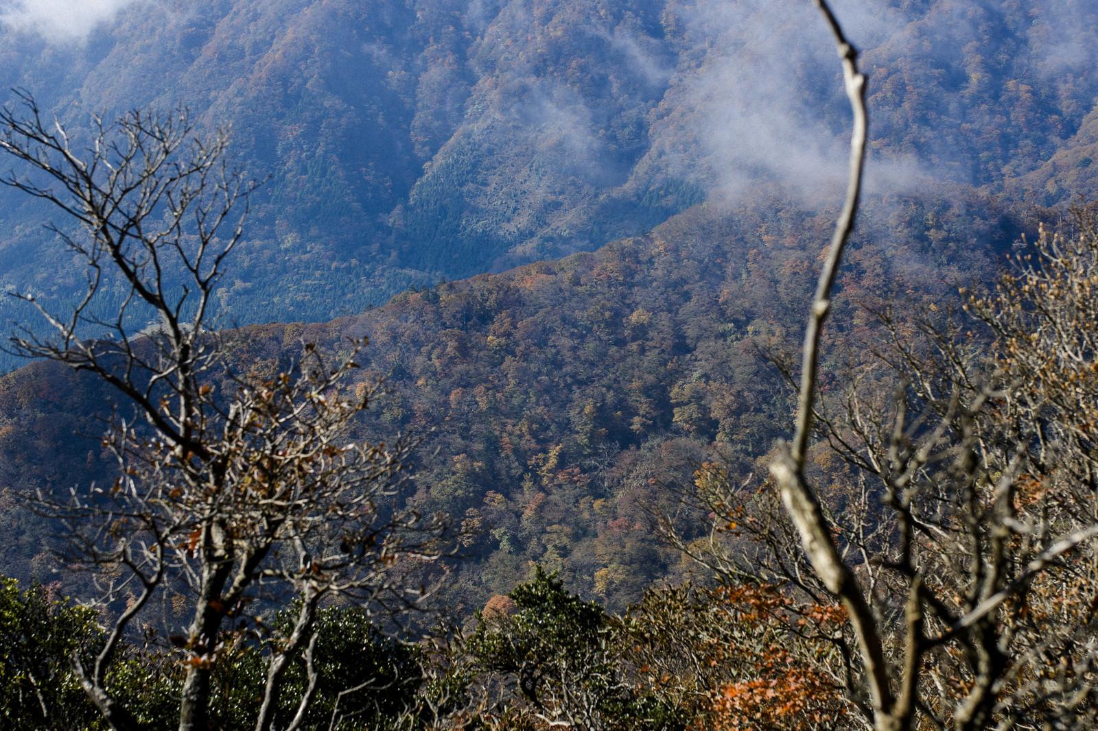 「紅葉した樹木に包まれる天城山の麓」の写真