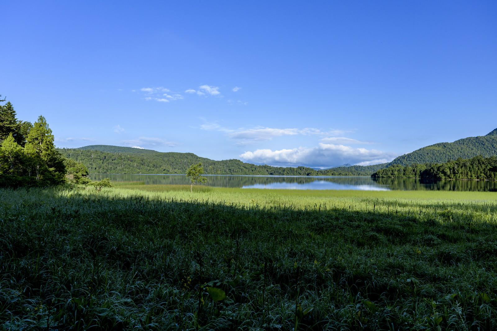 「尾瀬に広がる湿原」の写真