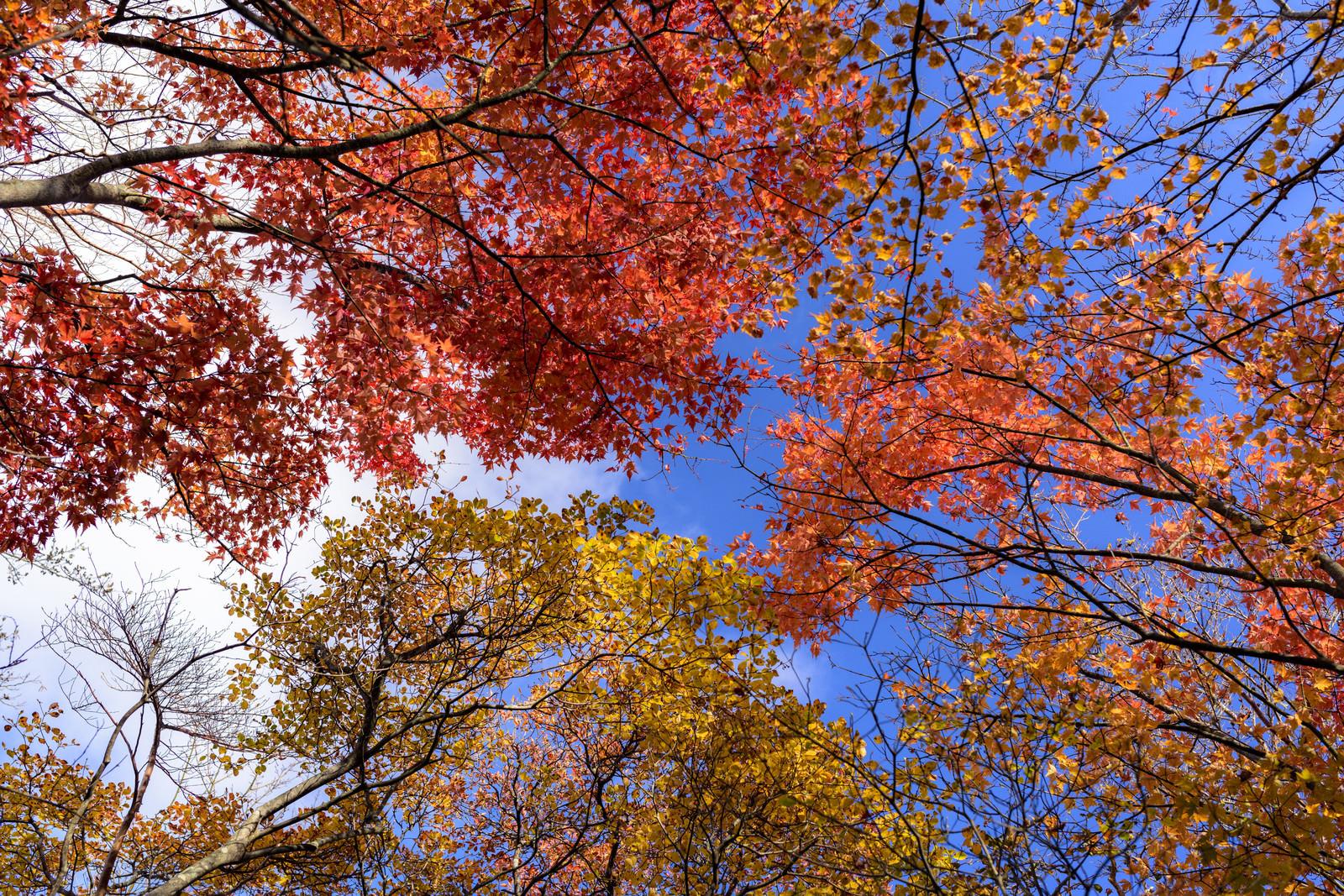 「天城山の山奥で撮影した紅葉」の写真