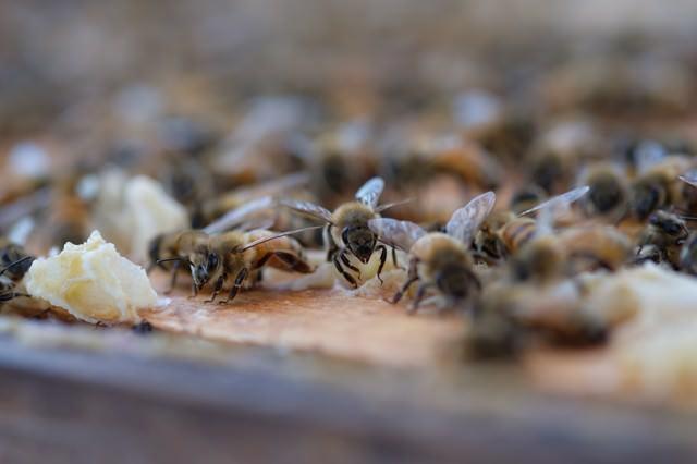 至る所に蜜蝋で巣を拡張しようとする働き蜂の写真