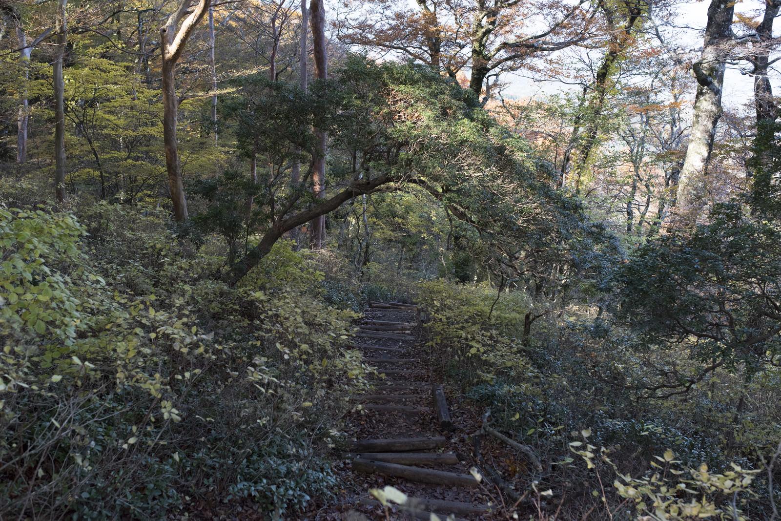 「緑が生い茂る天城山の登山道」の写真