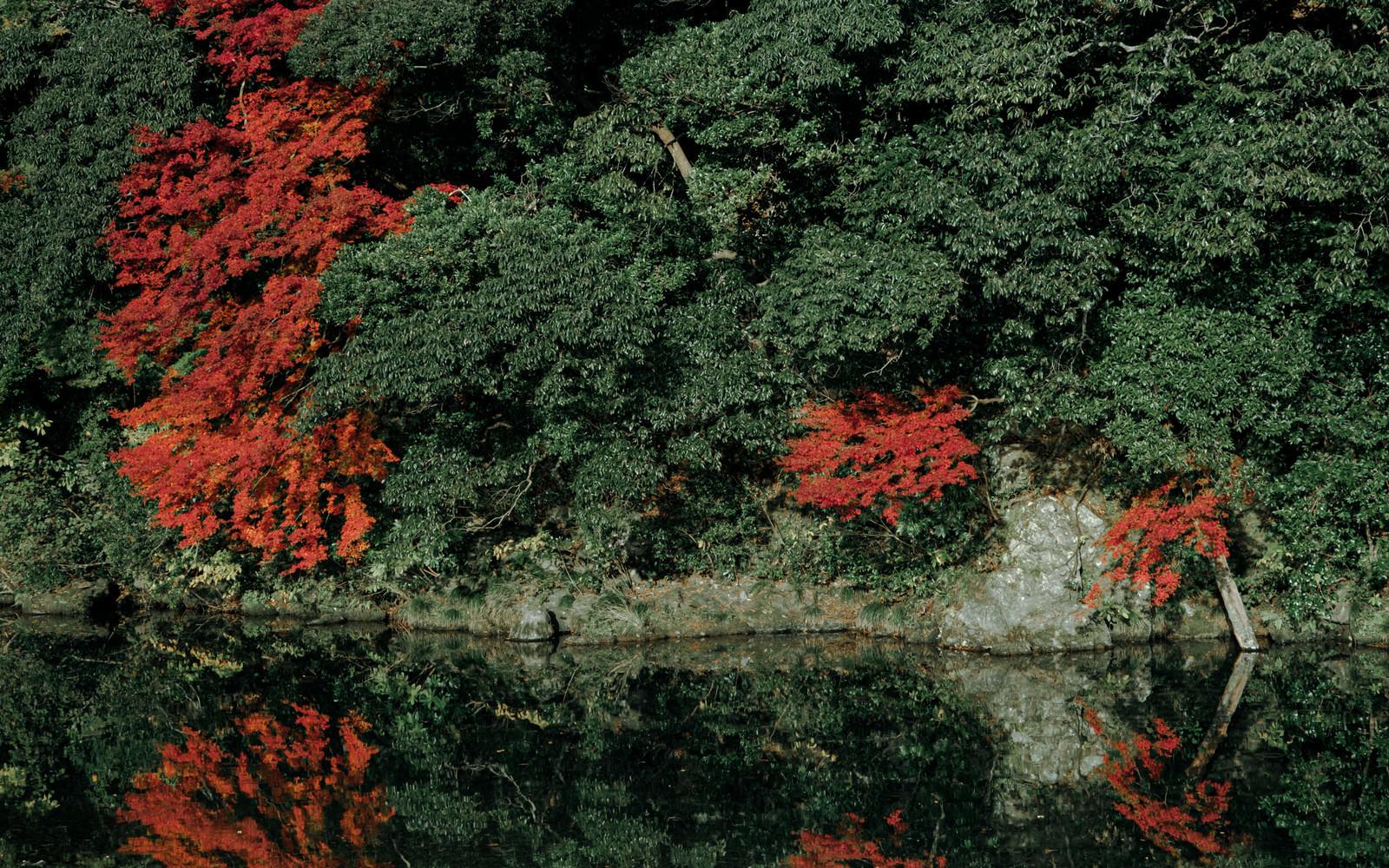 「川沿いの木々と紅葉したもみじ」の写真