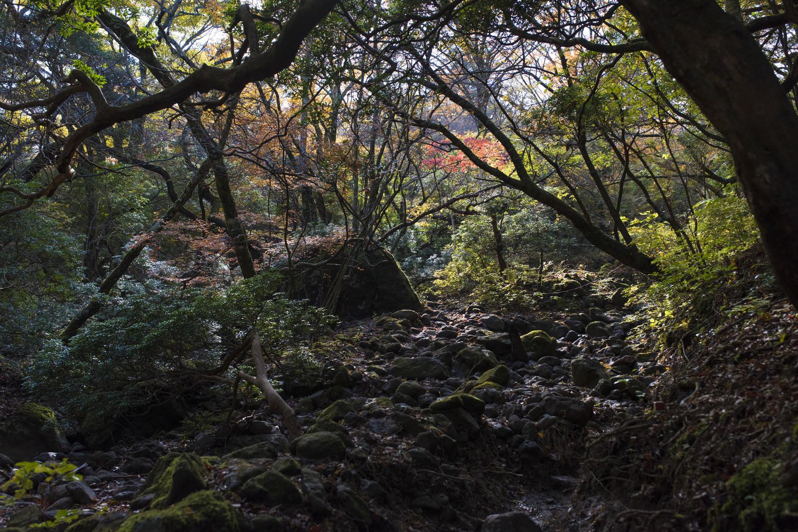 「鬱蒼とした樹林が続く天城山の麓」の写真