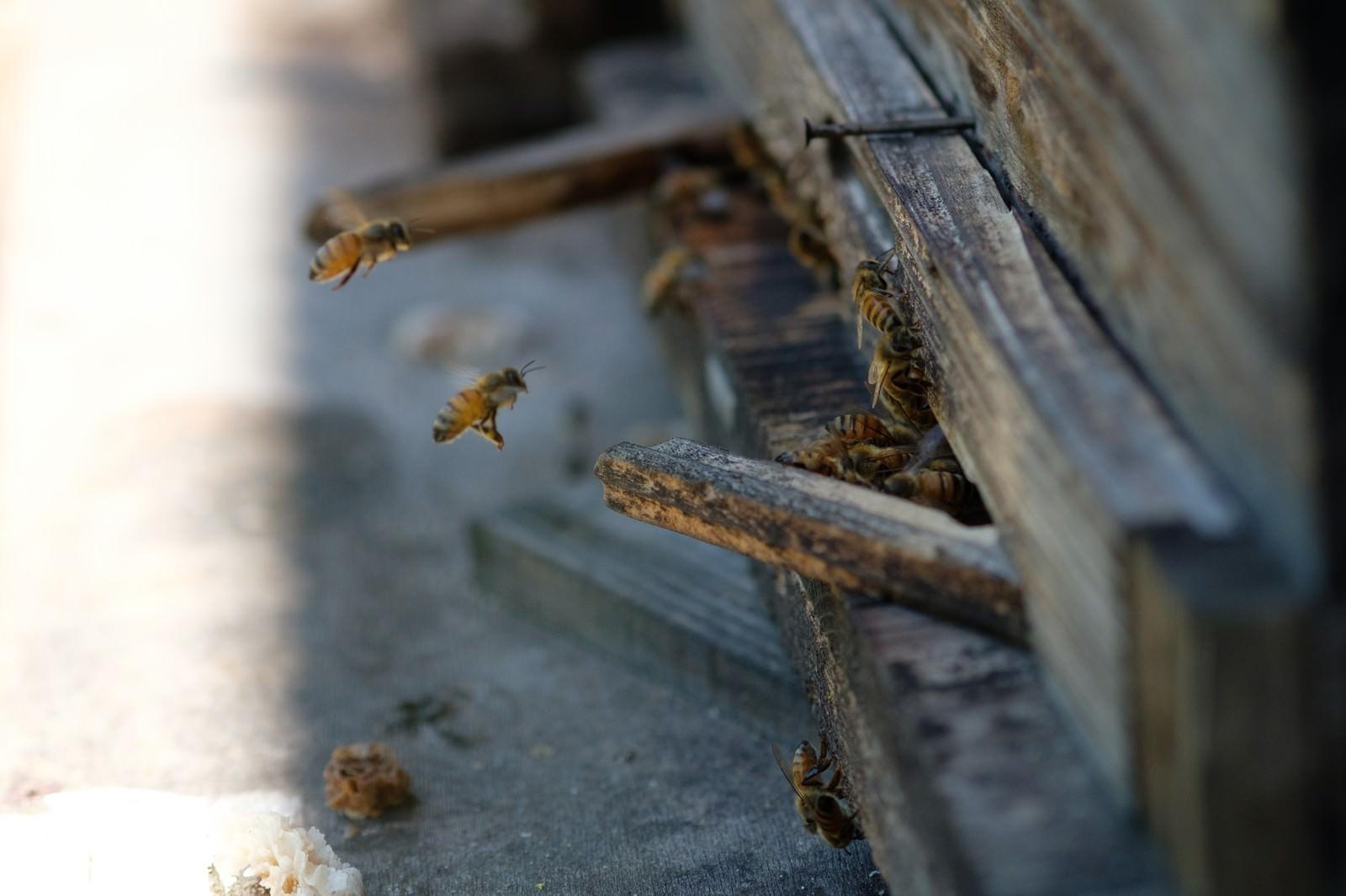 「巣箱の入口と蜜蜂(養蜂場)」の写真