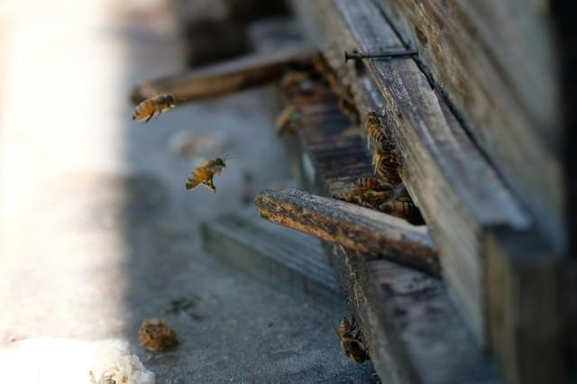 巣箱の入口と蜜蜂(養蜂場)の写真