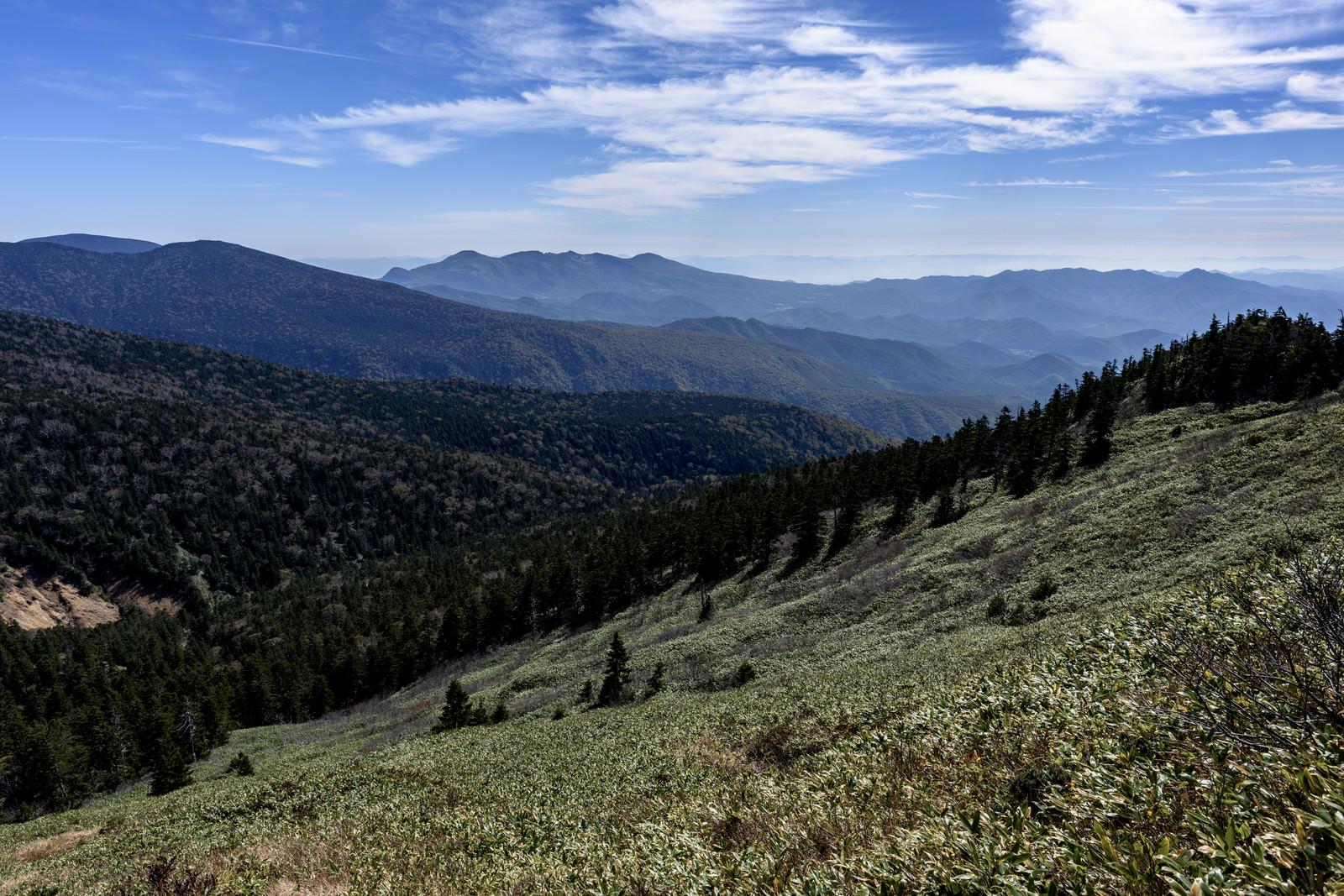 「西大巓直下の笹原と吾妻の山々」の写真