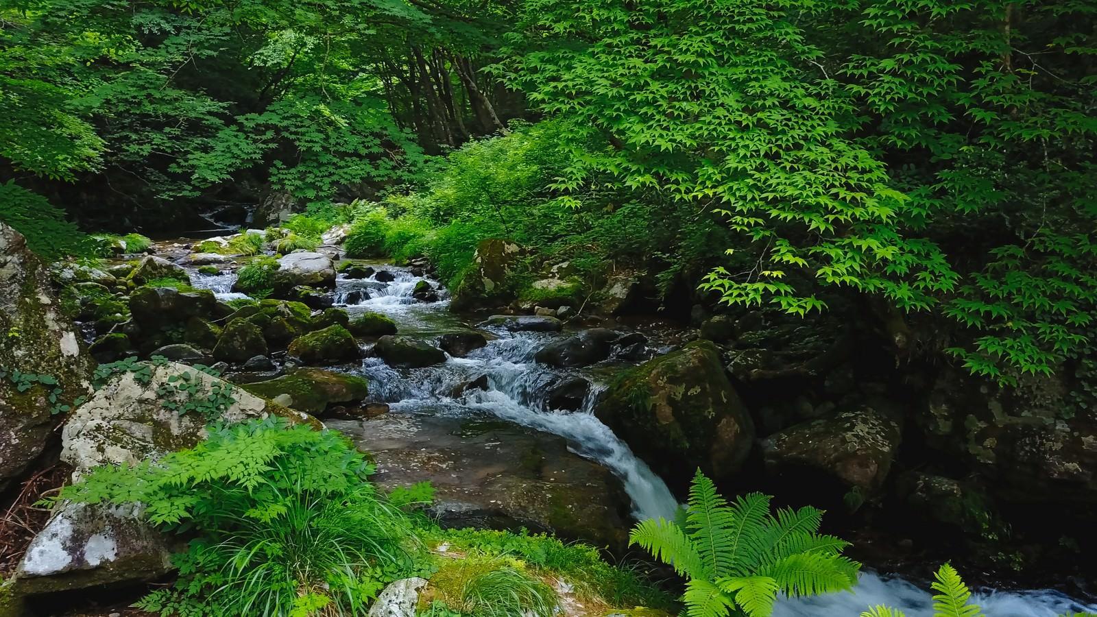 「白賀渓谷(岡山県鏡野町)」の写真