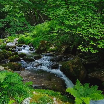 「白賀渓谷(岡山県鏡野町)」の写真素材