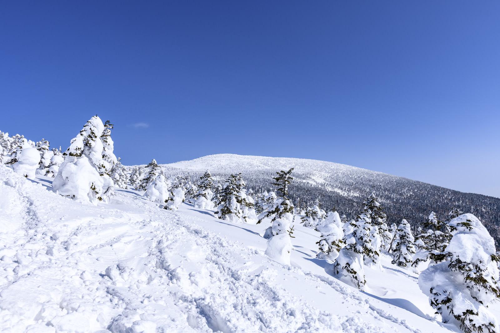 「雪に覆われた西吾妻山(にしあづまやま)」の写真