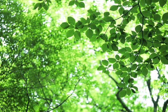 新緑と木漏れ日の写真