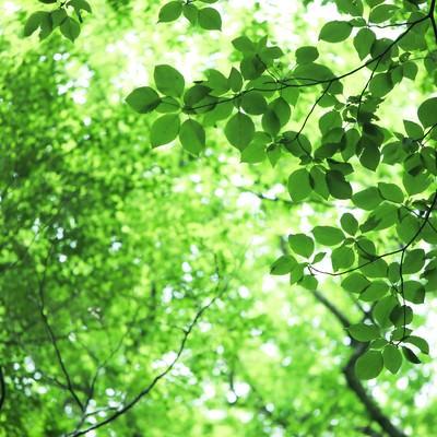 「新緑と木漏れ日」の写真素材