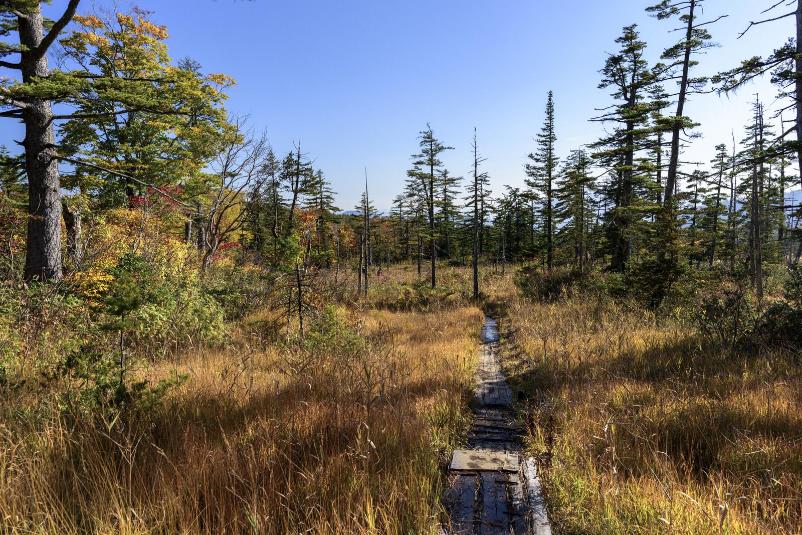 「黄葉のデコ平湿原(西吾妻山)」の写真