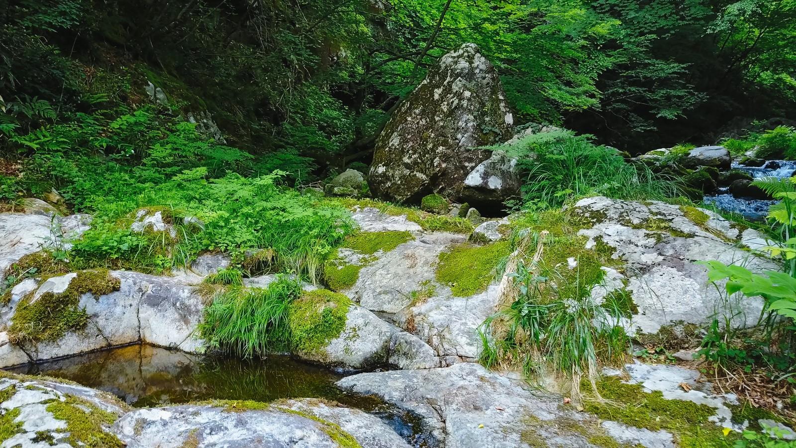 「白賀渓谷の岩場」の写真