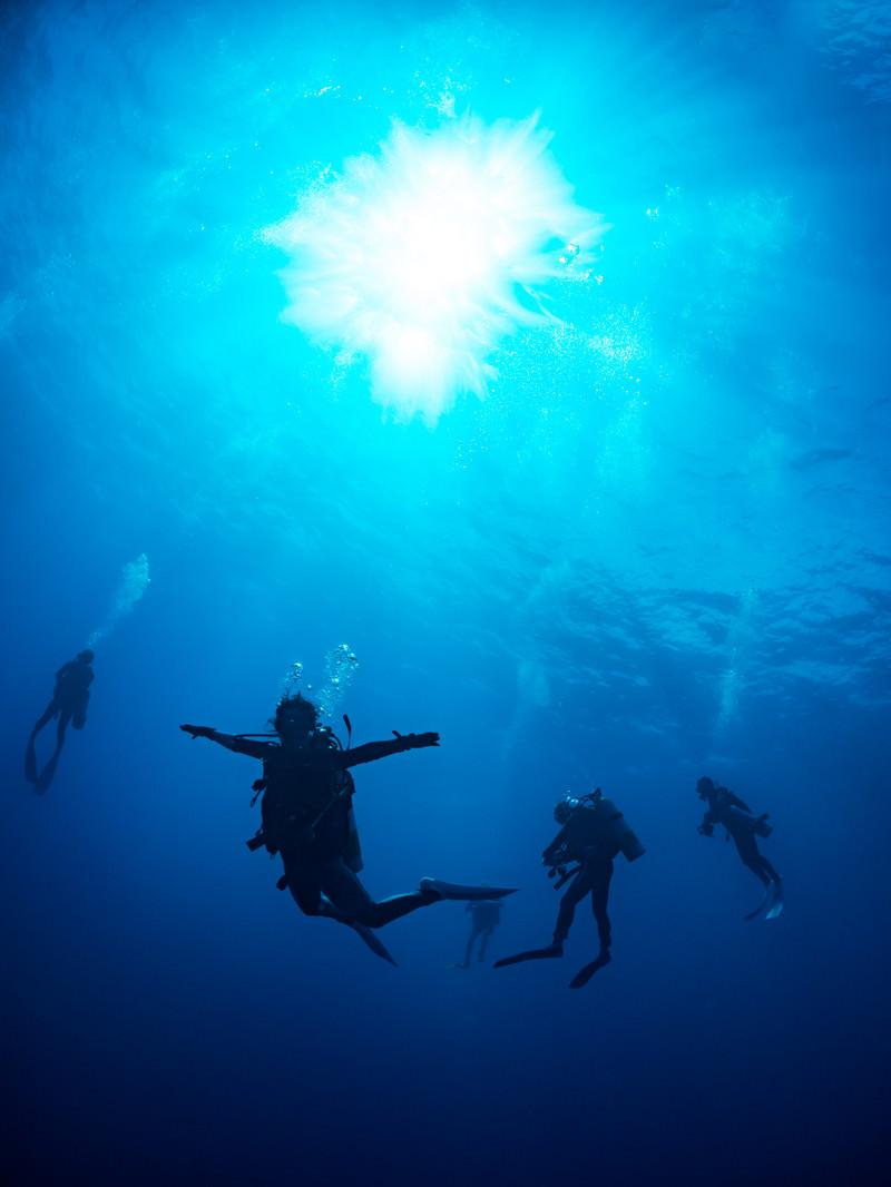 「浮遊するダイバー」の写真