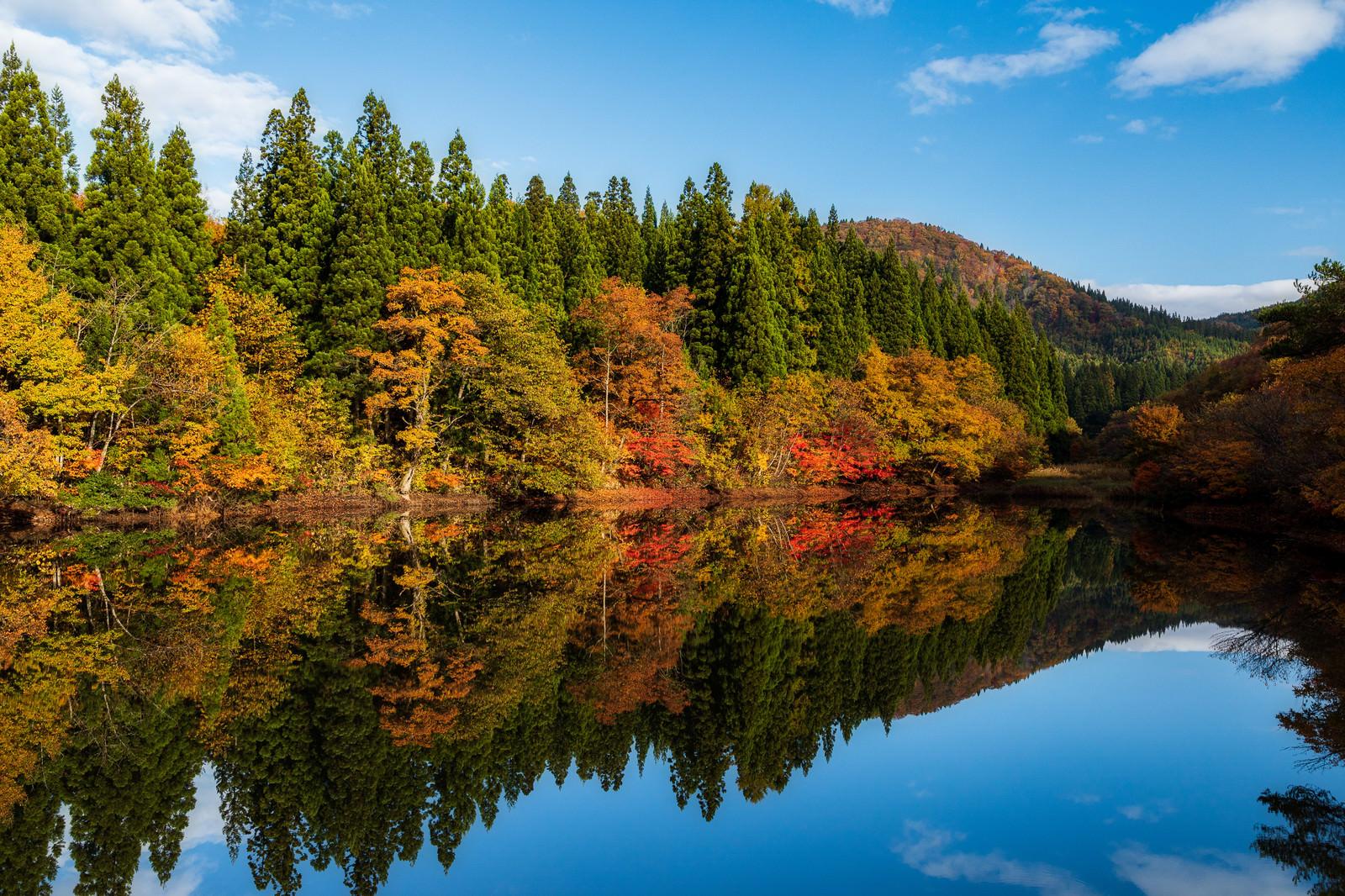「紅葉で彩るため池」の写真