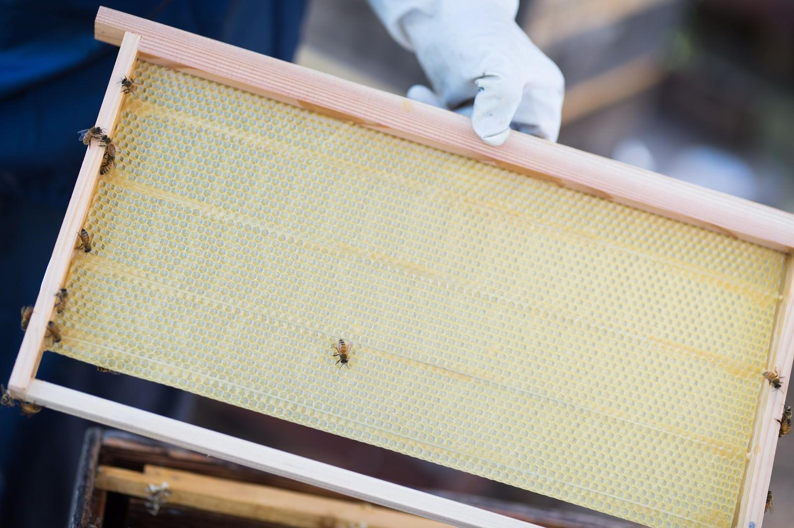 「新しい養蜂用の蜜板」の写真