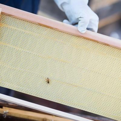 「新しい養蜂用の蜜板」の写真素材