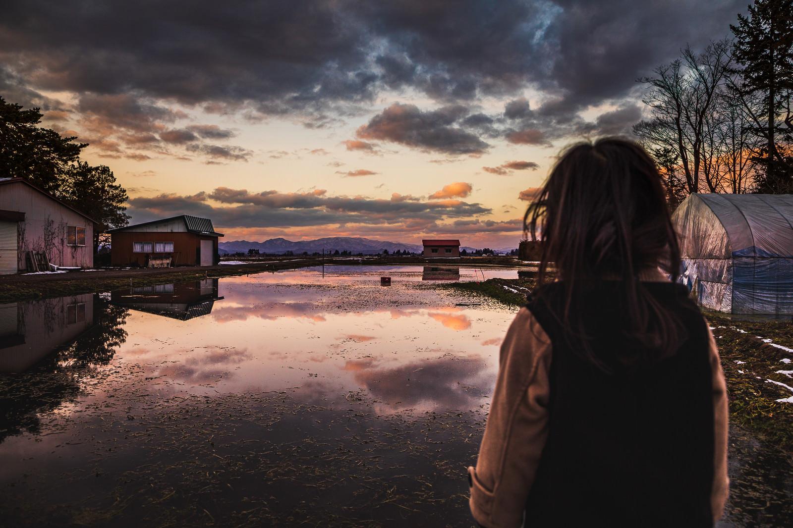 「夕暮れのセリ畑を見つめる少女」の写真