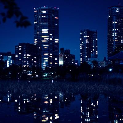 「夜が更けた不忍池の様子」の写真素材
