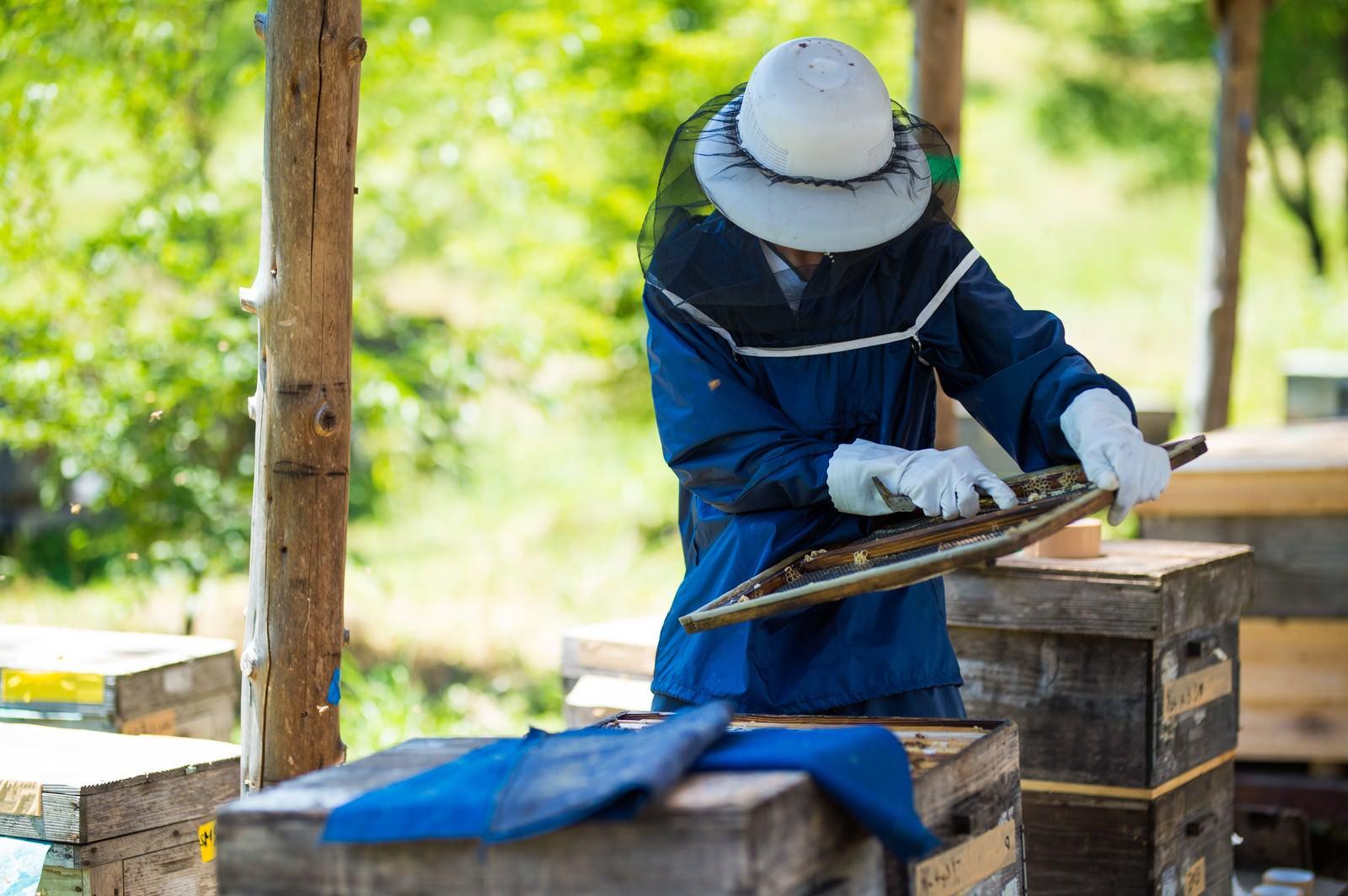 「蜜板からミツロウを削る様子」の写真