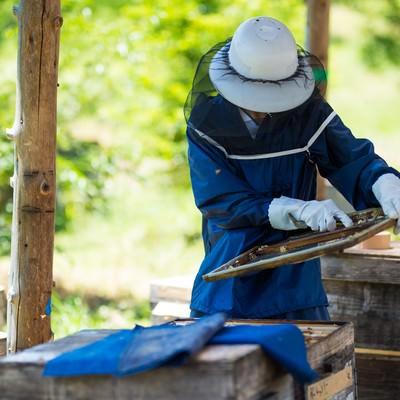 「蜜板からミツロウを削る様子」の写真素材