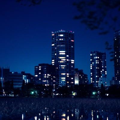 「高層マンションと不忍池の夜」の写真素材