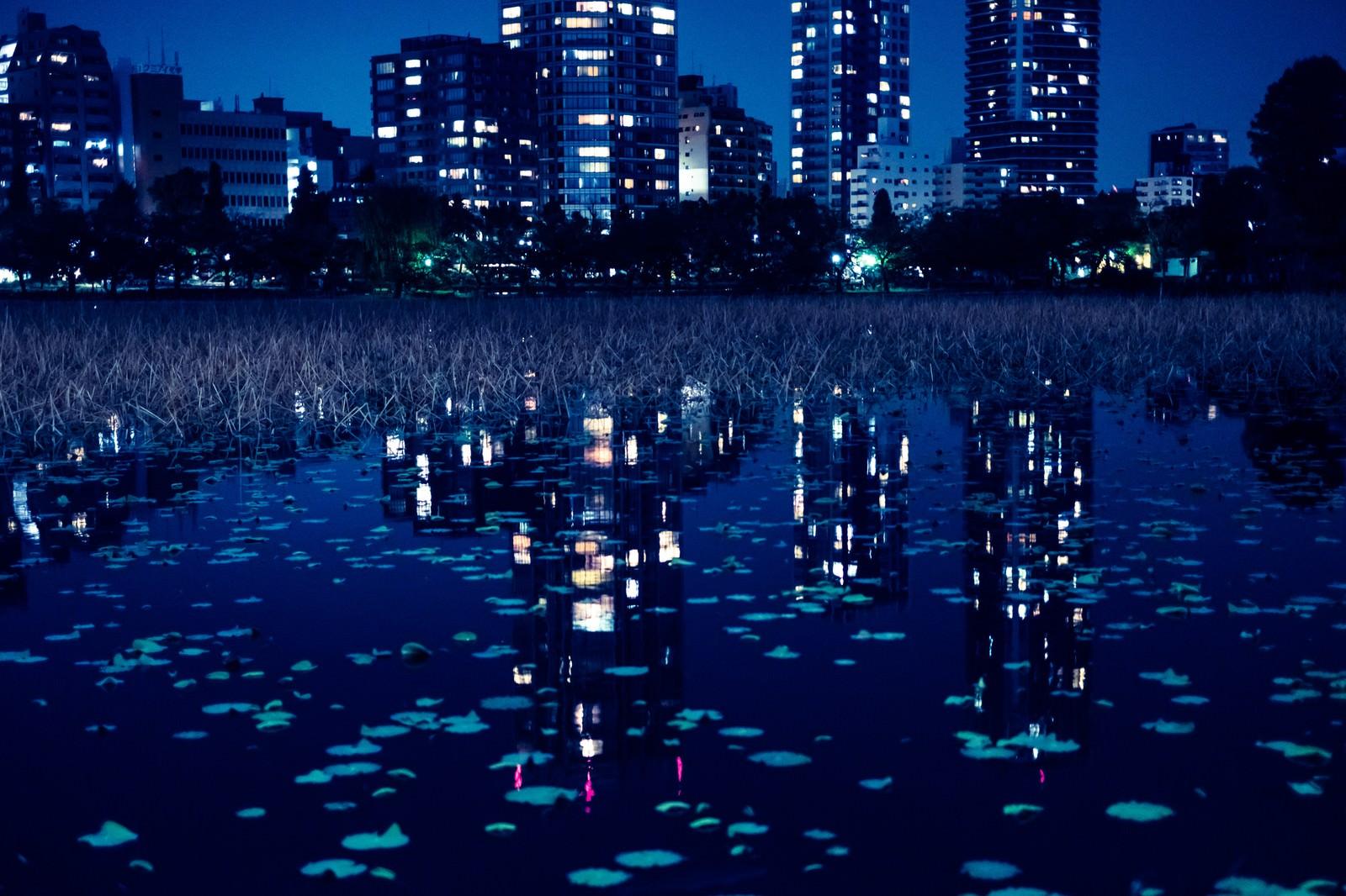 「夜の不忍池に写り込んだ高層ビルの明かり」の写真