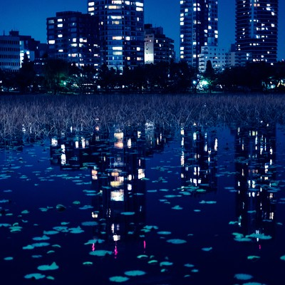 「夜の不忍池に写り込んだ高層ビルの明かり」の写真素材