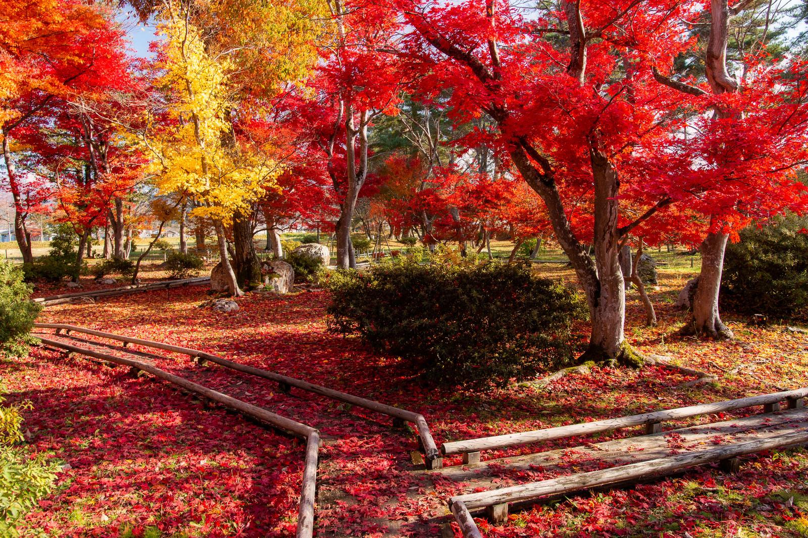 「落葉したもみじと日本庭園(旧池田氏庭園・払田分家庭園)」の写真