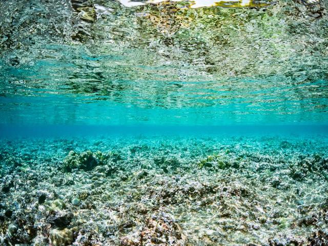 透明度の高い海中から見る水面の写真
