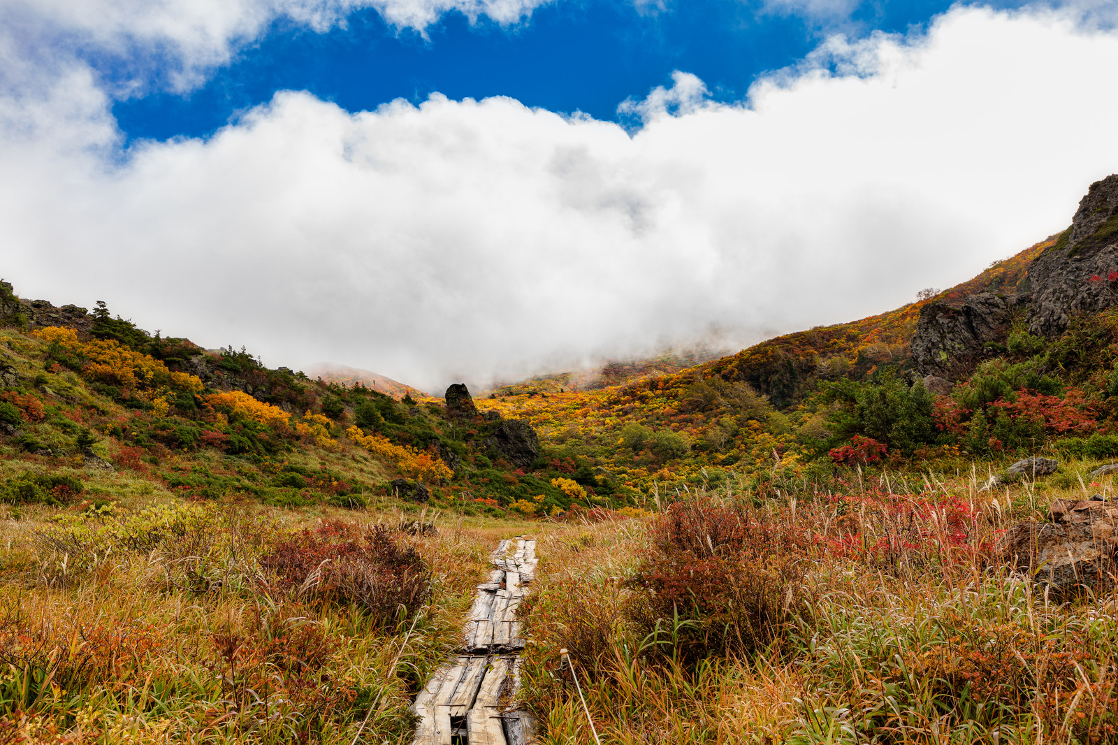 「秋の栗駒山へ続く木道」の写真