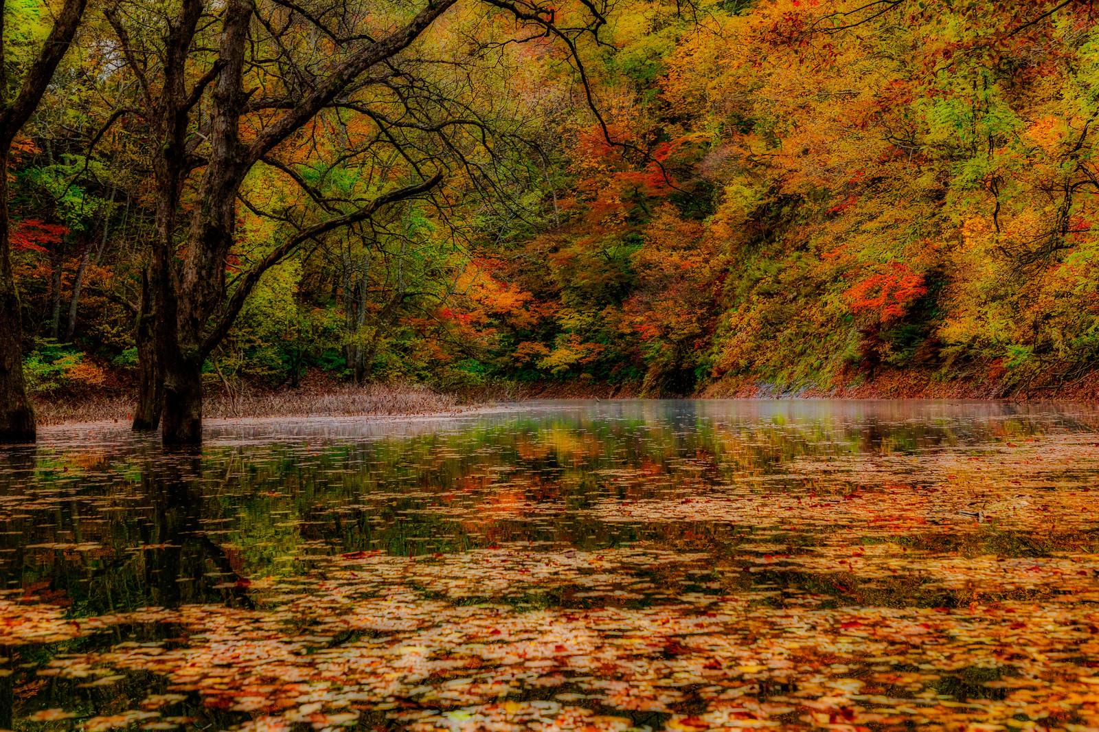 「秋の紅葉と落葉の川面」の写真