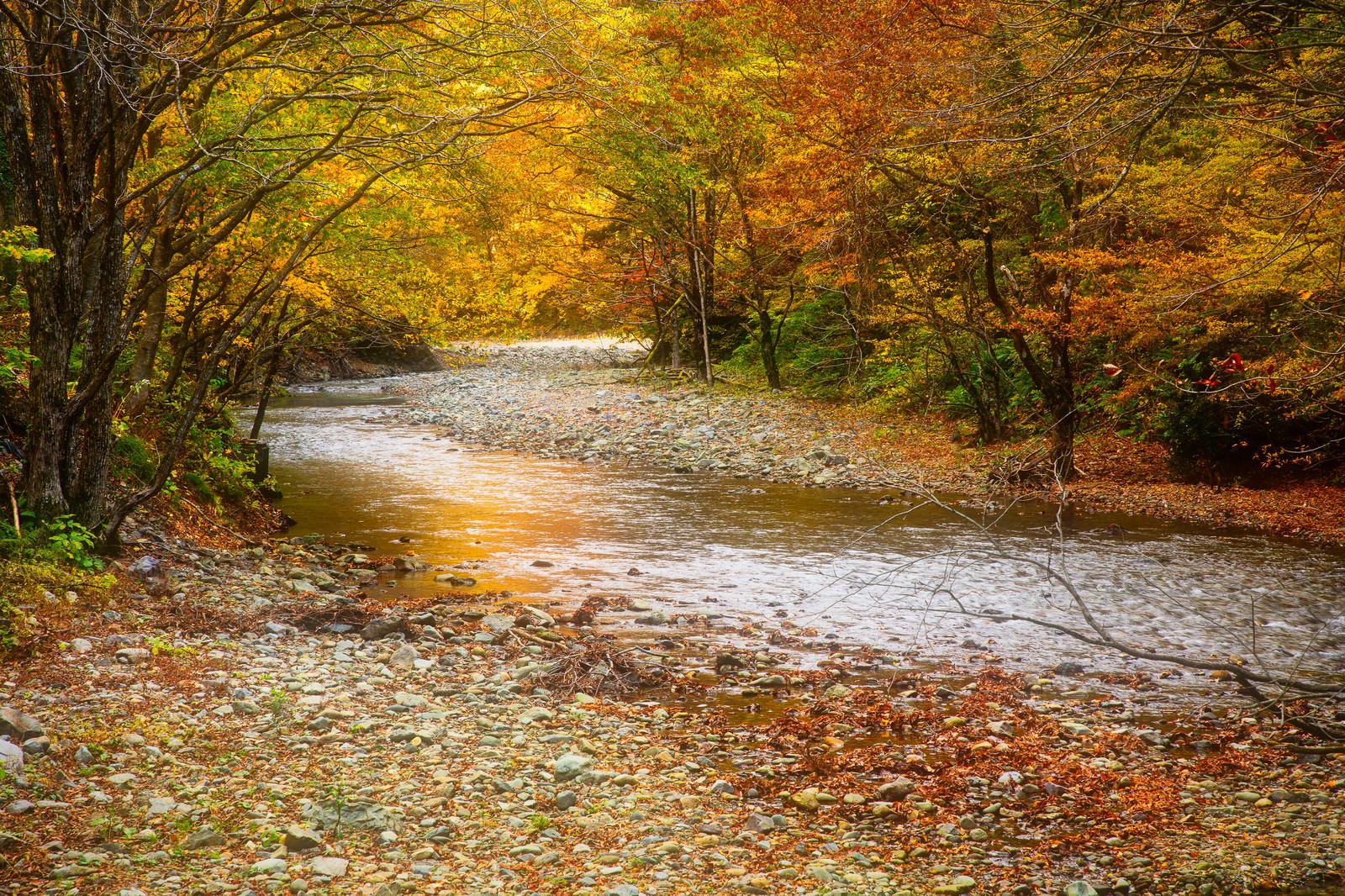「秋の紅葉と真木渓谷(秋田県大仙市)」の写真
