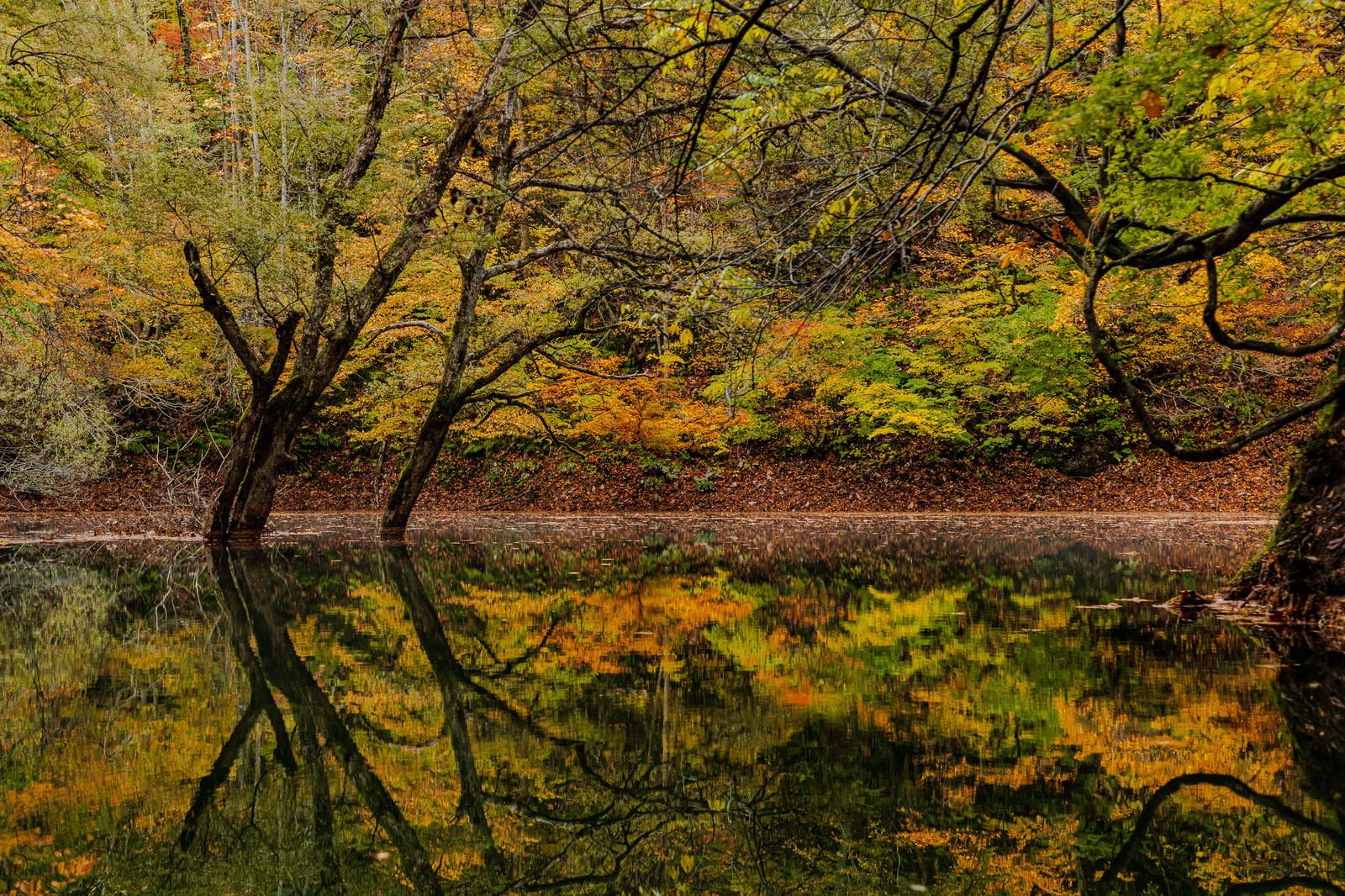 「紅葉した木々と廻戸川(岩手県西和賀町)」の写真