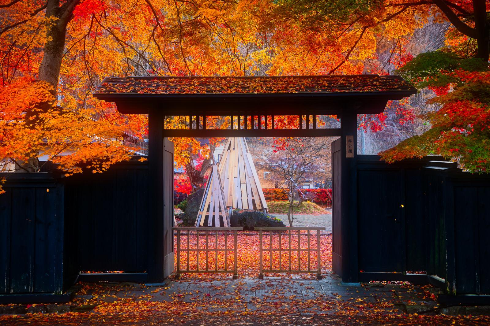 「雨上がりの和風の門と落葉(角館武家屋敷)」の写真
