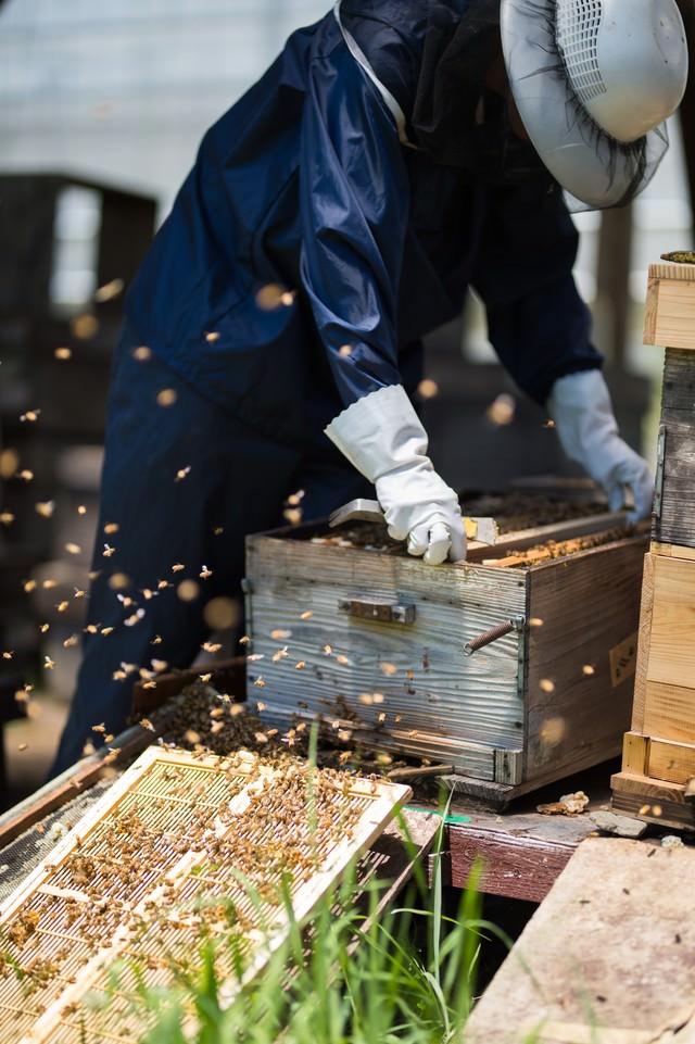 飛び交うミツバチの中で作業をする養蜂家の写真