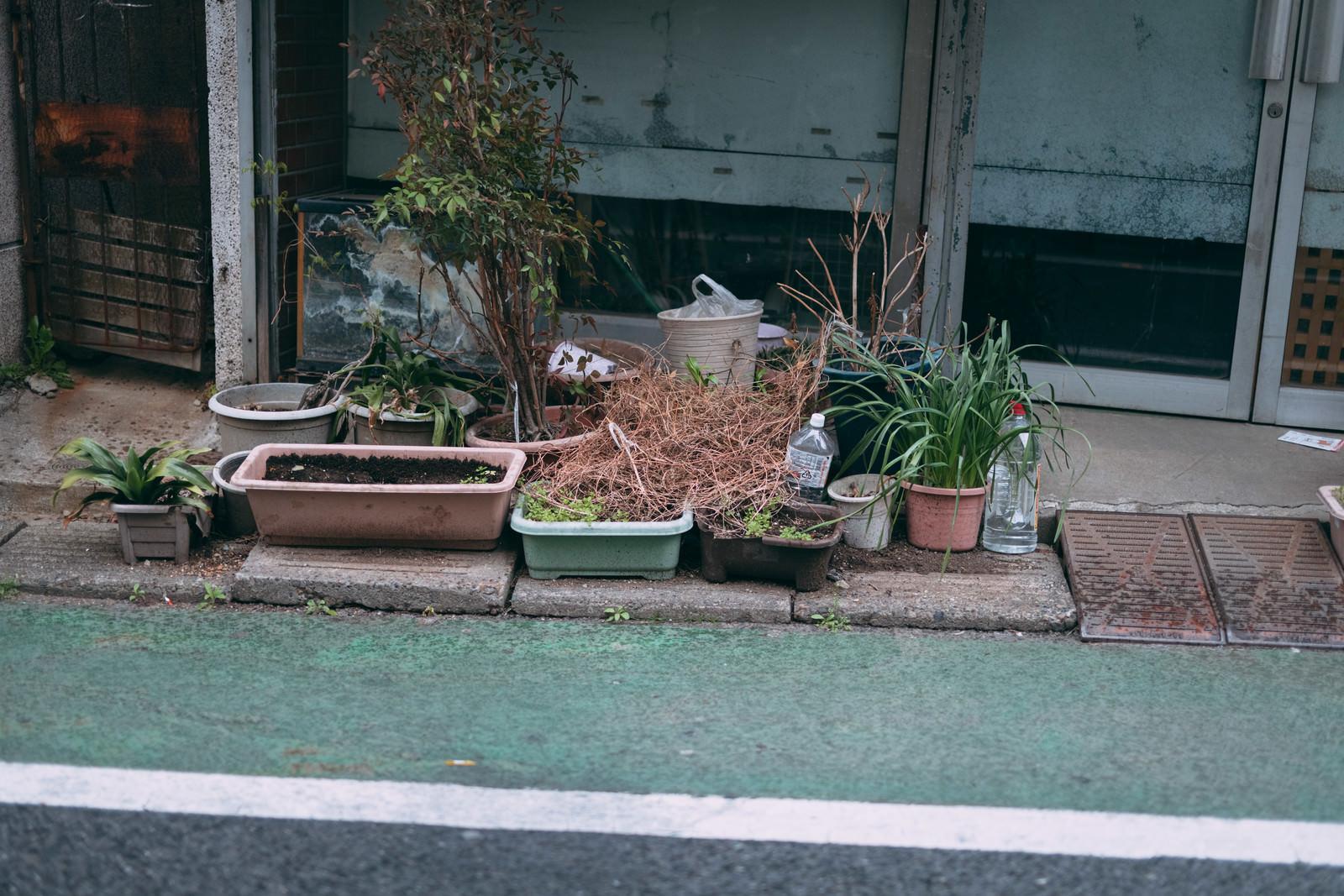 「枯れた鉢植え」の写真
