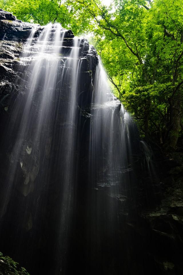 初夏ならではの滝と新緑のコントラストの写真