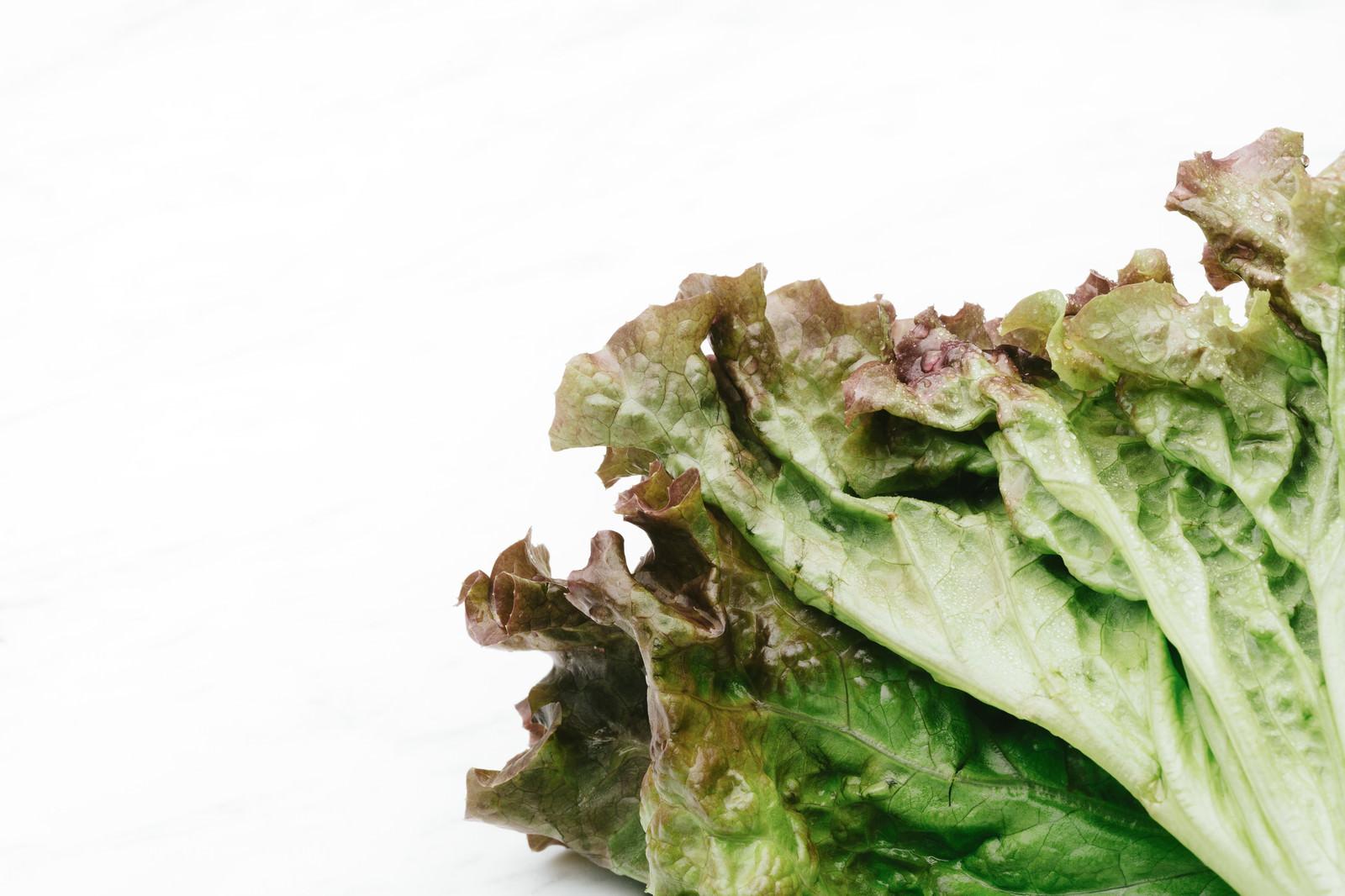 「サニーレタスの葉」の写真