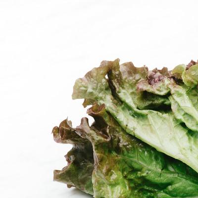 サニーレタスの葉の写真