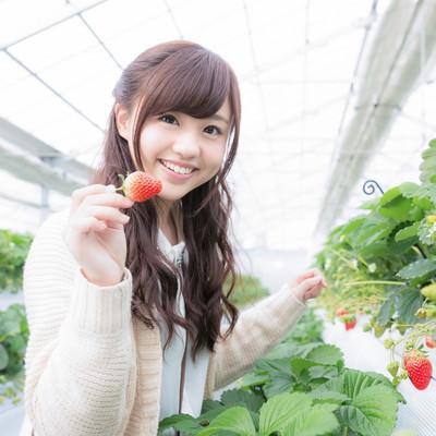 「真っ赤ないちごを摘み嬉しそうに笑う彼女」の写真素材