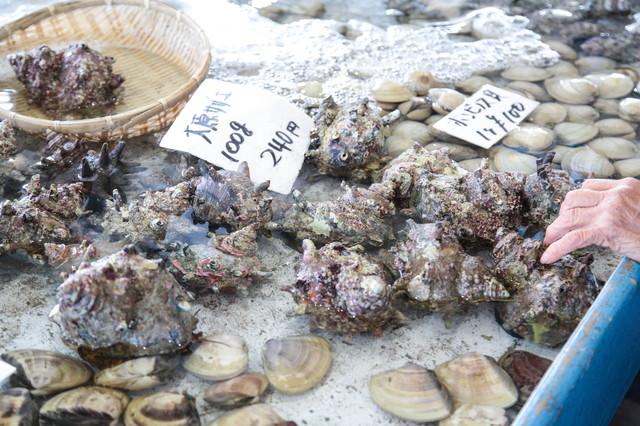 いすみ市大原漁港で採れたサザエの写真