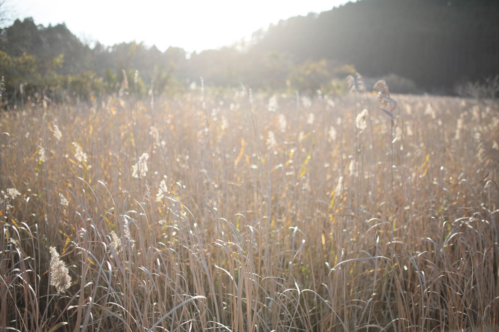 「トンボの沼の水生植物(千葉県いすみ市)トンボの沼の水生植物(千葉県いすみ市)」のフリー写真素材を拡大