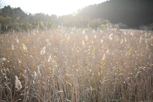 トンボの沼の水生植物(千葉県いすみ市)の写真