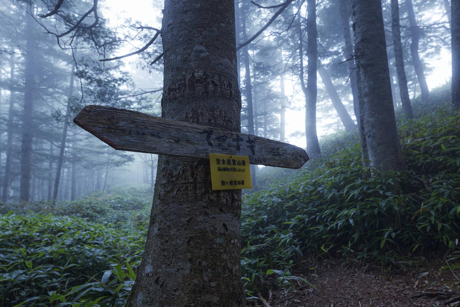 「霧に包まれるマセナギ(池山尾根)」の写真