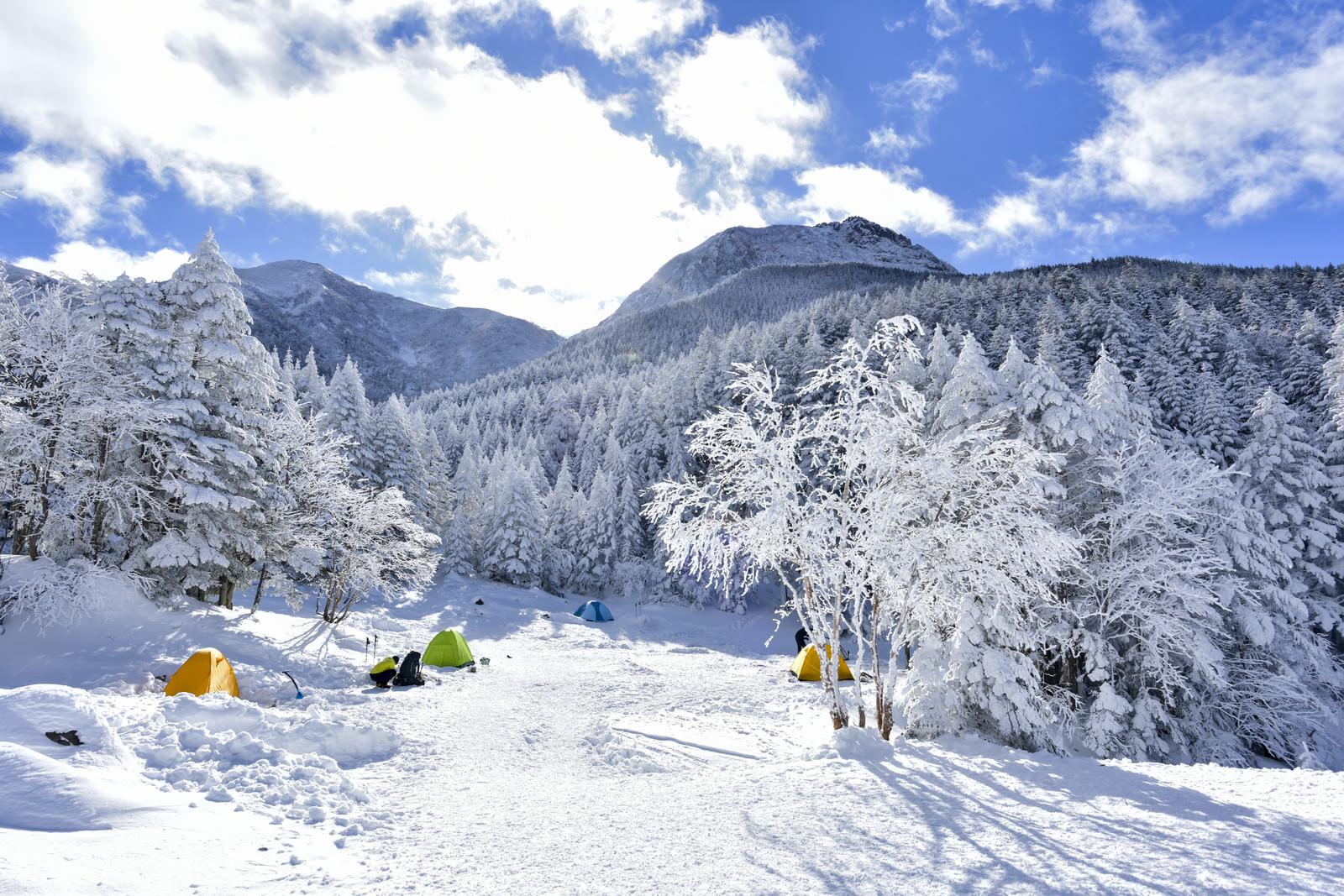「凍てつく木々が広がるテント場から見上げる八ヶ岳(やつがたけ)」の写真