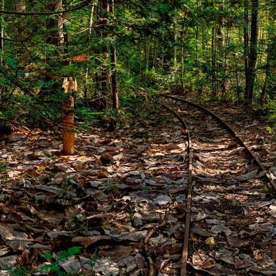 「森林鉄道の線路跡」の写真素材