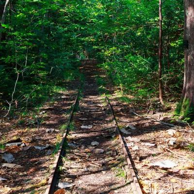 「森林鉄道跡」の写真素材